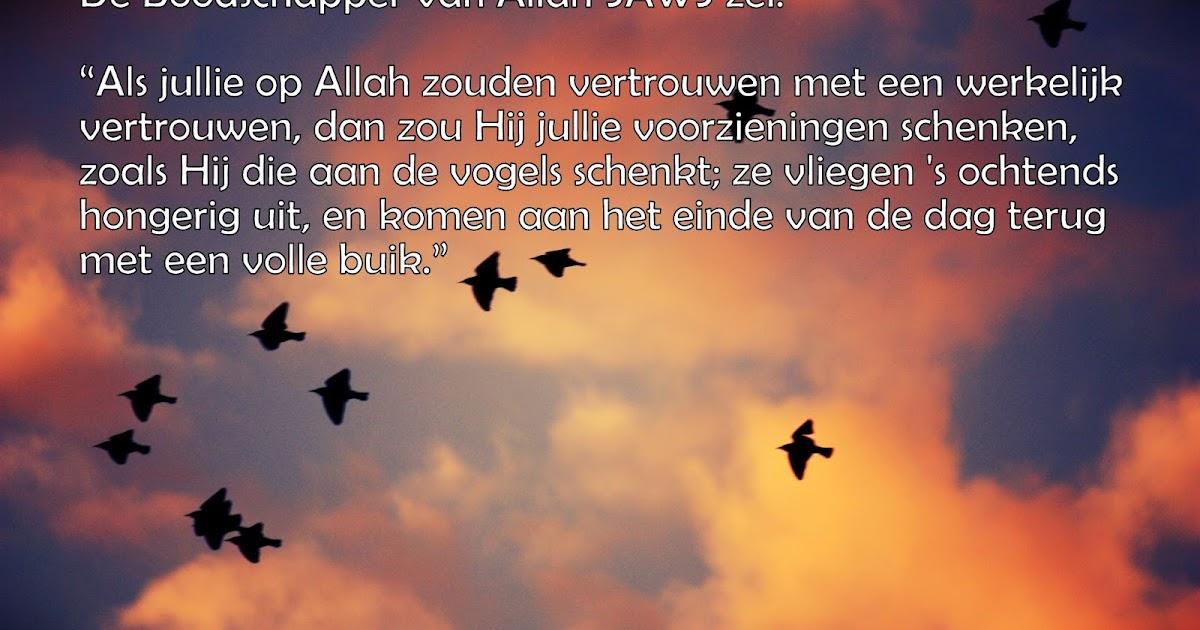 Koran Citaten : Citaten en wijze woorden uit de islam werkelijk op allah