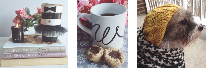 instagram instafriday alice and olivia starbucks chapters border terrier tea and cookies