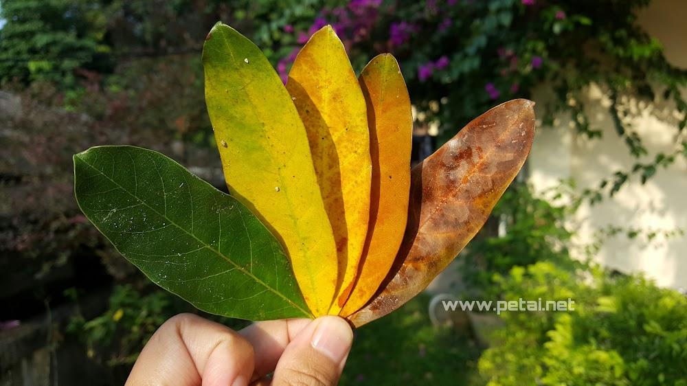 Warna-warna dedaun