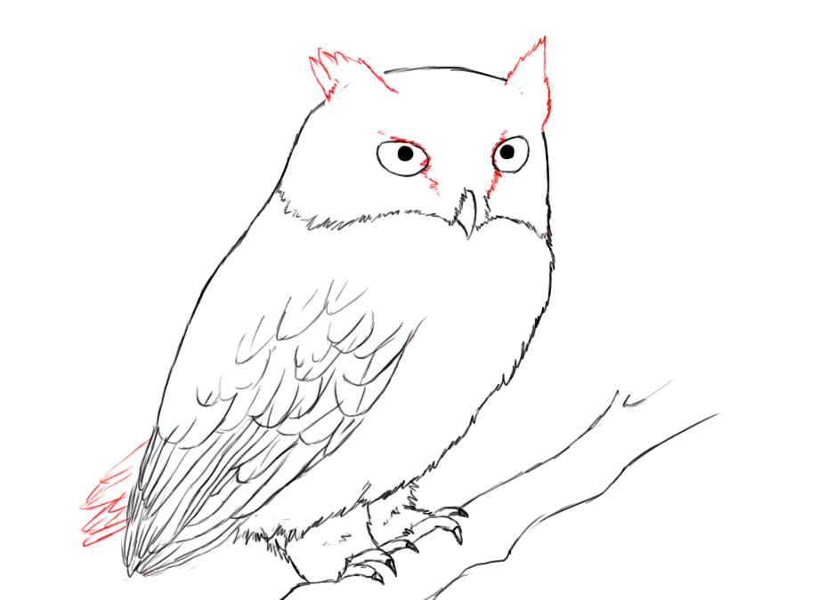 How to draw owls for Draw the owl