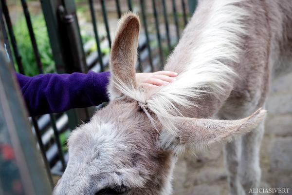 aliciasivert, alicia sivertsson, alicia sivert, berlin zoo, djurpark, djurhållning, instängda djur, djur i bur, cages, animal, animals, cage, åsna, donkey