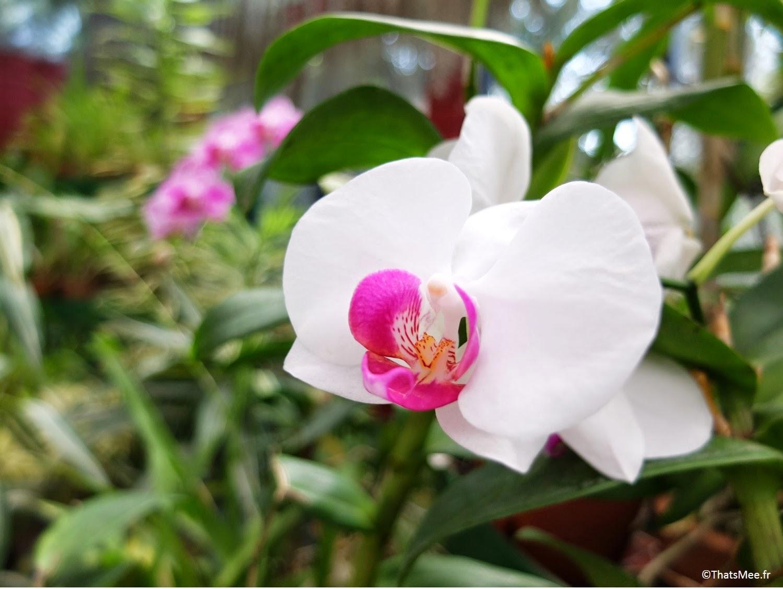 orchidées Jardin Botanique britannique Kandy, Sri-Lanka quartier universités