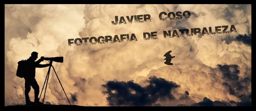Javier Coso Fotografía de Naturaleza
