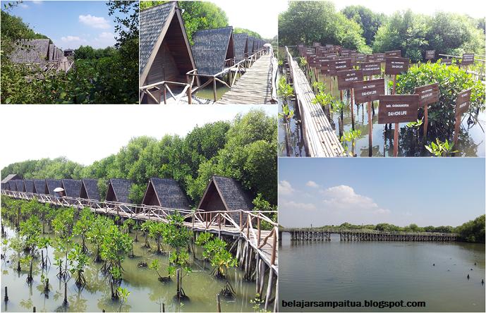 Liburan di Jakarta: Hutan Mangrove PIK