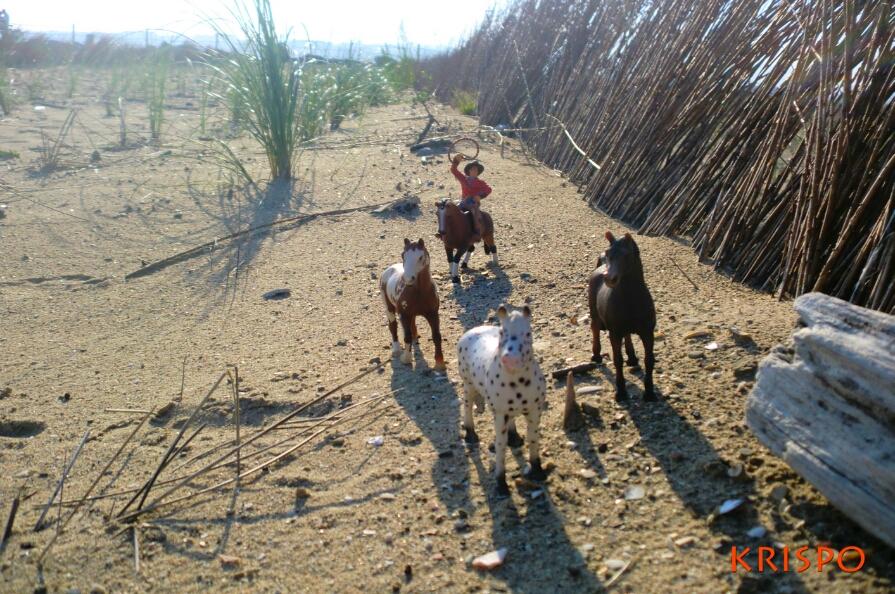 lacero cow boy atrapando caballos en miniatura