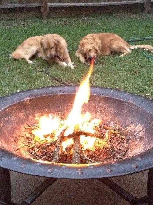 Semburan Api Anjing