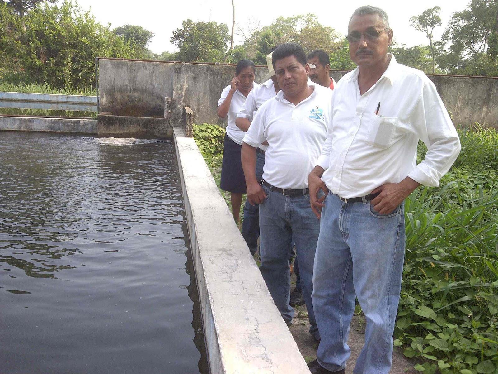 Cafe analisis de manuel estrada solis hernandez supervisa for Estanques para agua potable