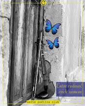 Entre violines!