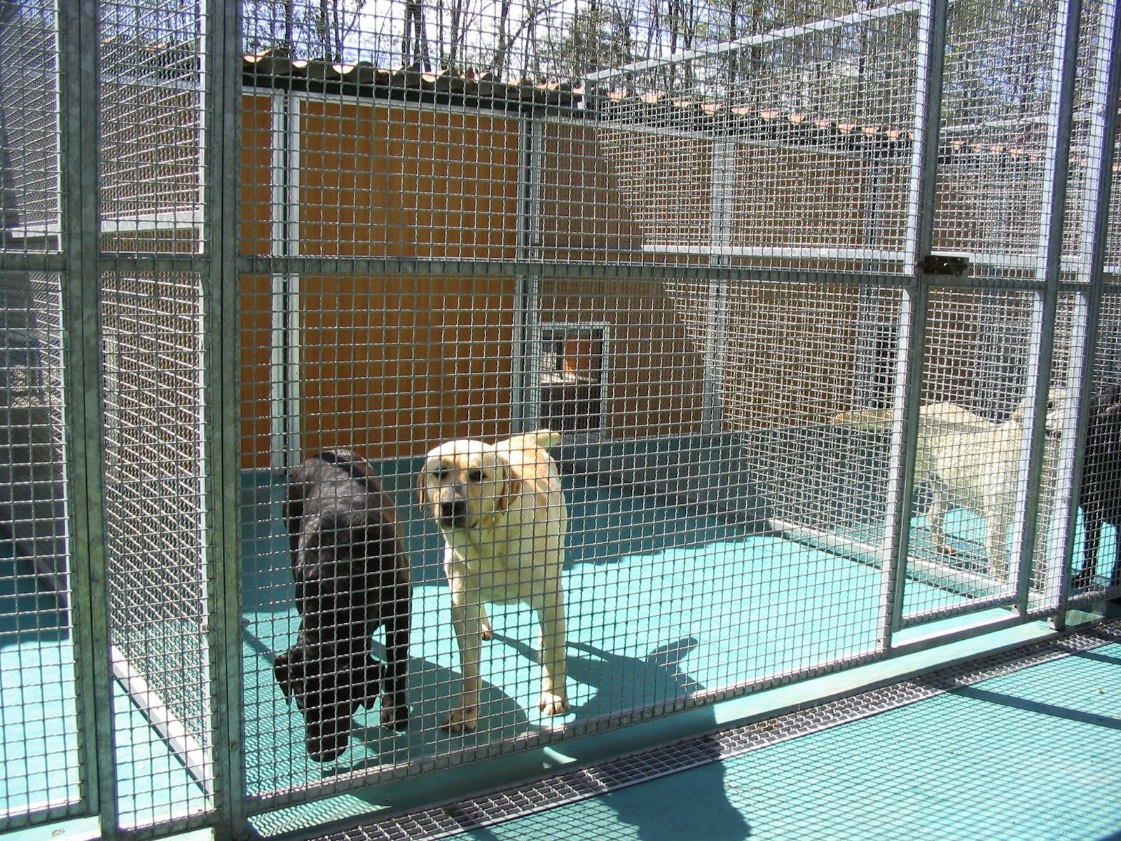 Alla ricerca del siberian husky box a prova di husky for Costruire box per cani
