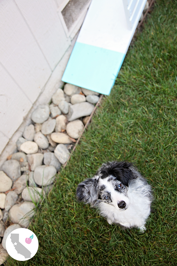 DIY Dog Door Ramp & Scout