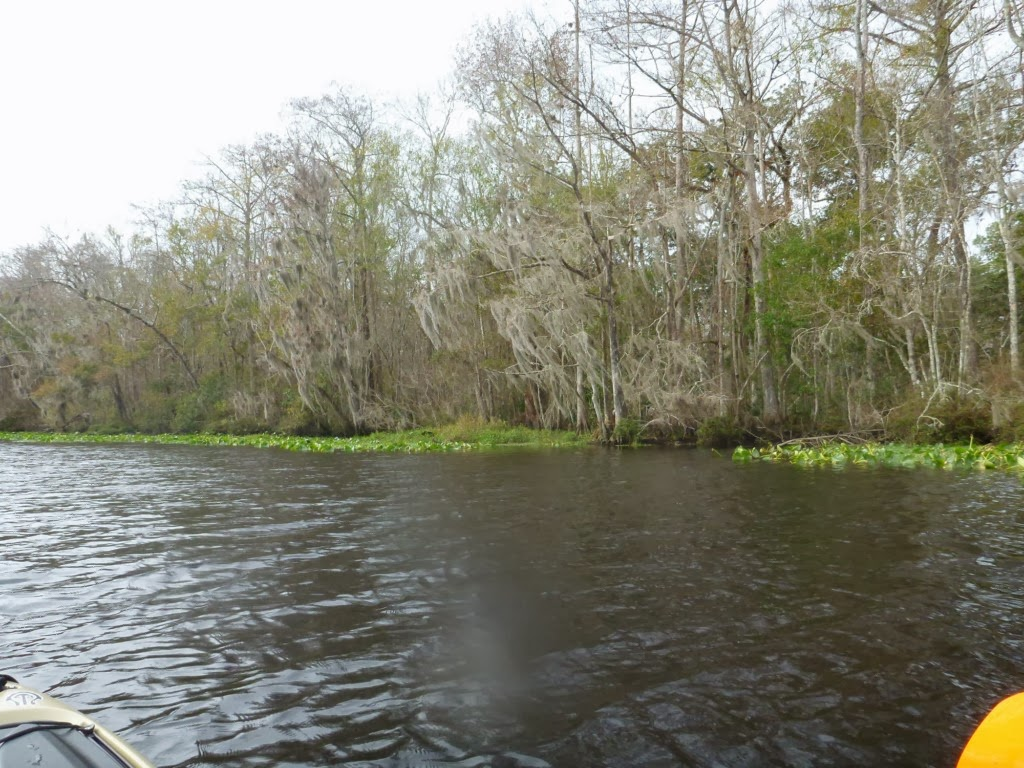 Exploring florida trout creek in orangedale fl for Fish creek florida