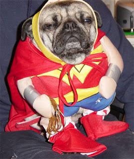 SUPERHERO DOG
