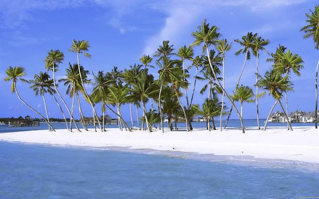 Hermosas Palmeras en la Playa Fondos de Pantalla de Paisajes
