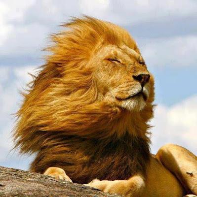 leon pelos al viento