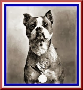 Sons Of Savages Sergent Stubby War Dog