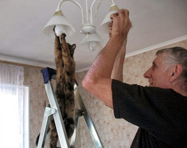 Funny cats - part 78 (35 pics + 10 gifs), cat pics, cat helps human change lamp