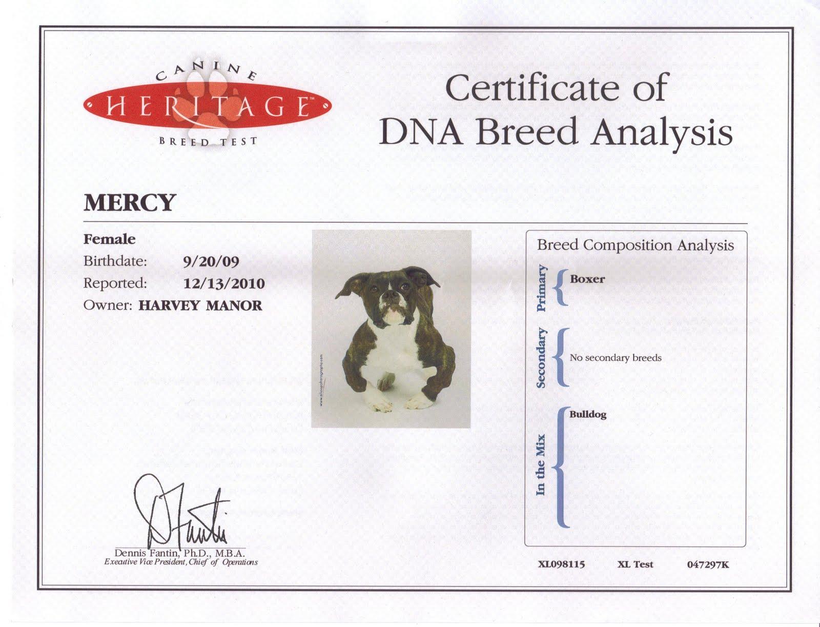 Dog Breed Analysis