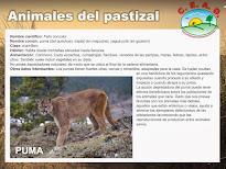 Animales del pastizal: Fichas
