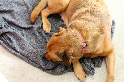 Chloe dog