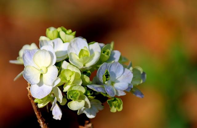 flores azuis e brotos verdes