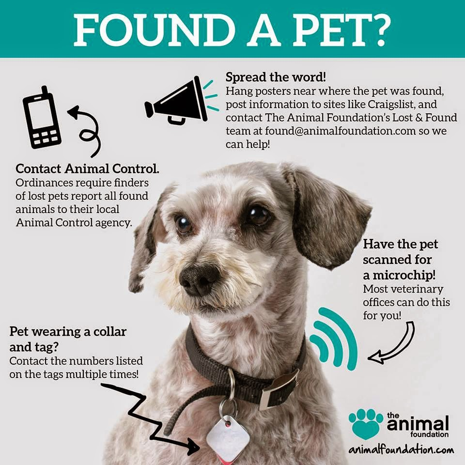 Search Lost and Found Reports | PetFBI