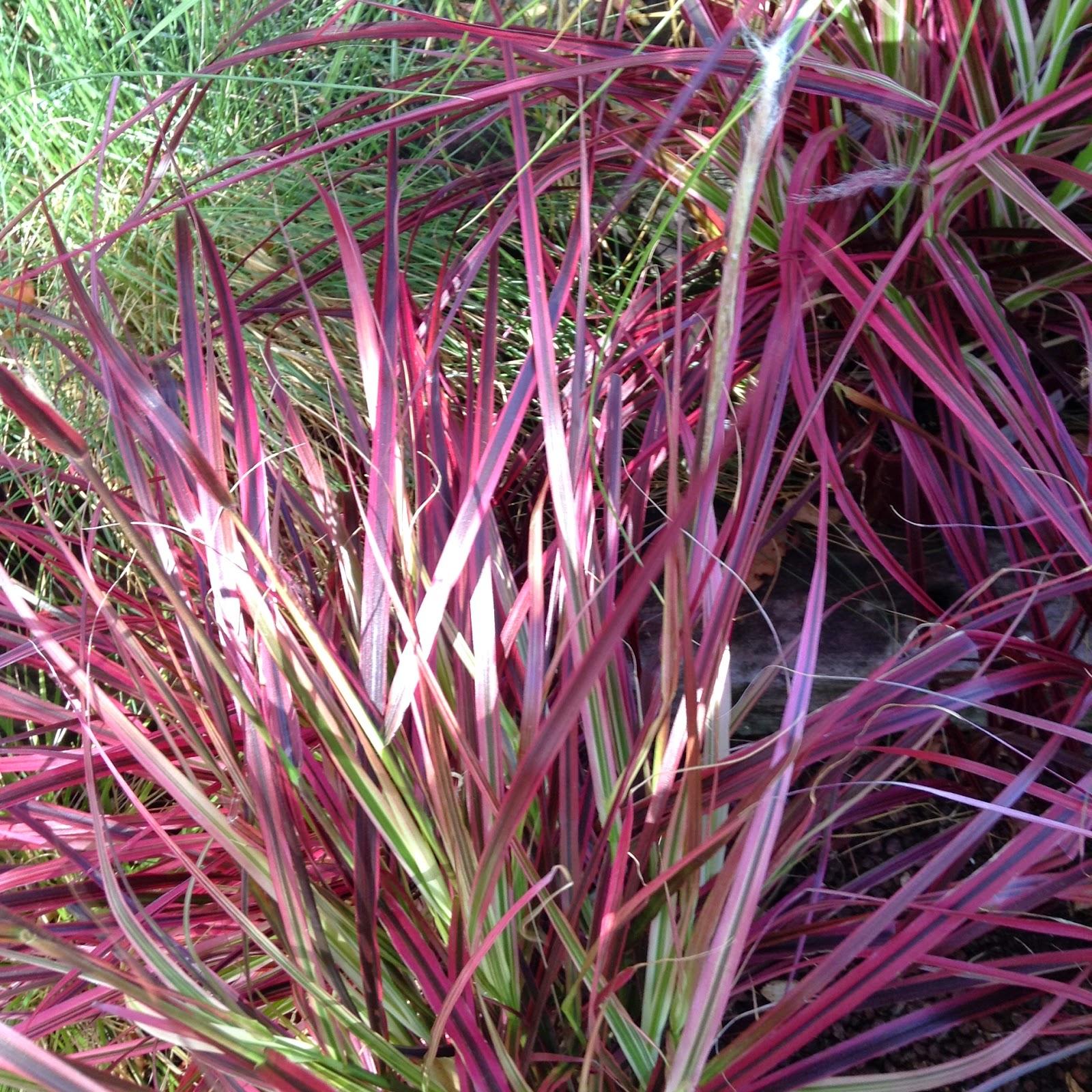 Plantas de exterior que aguanten el sol interesting - Plantas de exterior resistentes al frio ...