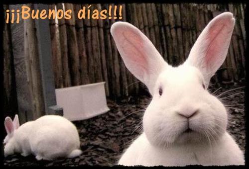 Hola y adios.  Conejo-miron+(1)