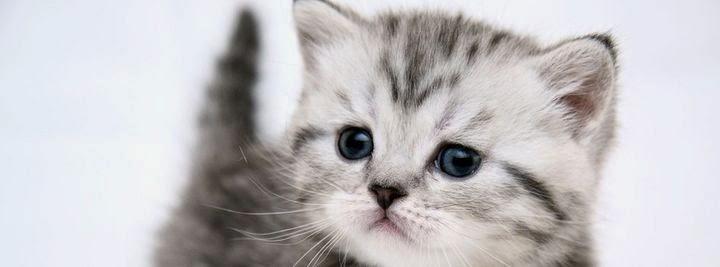 غلاف فيس بوك قطة