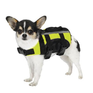 Aquatic Chihuahua Life Jacket