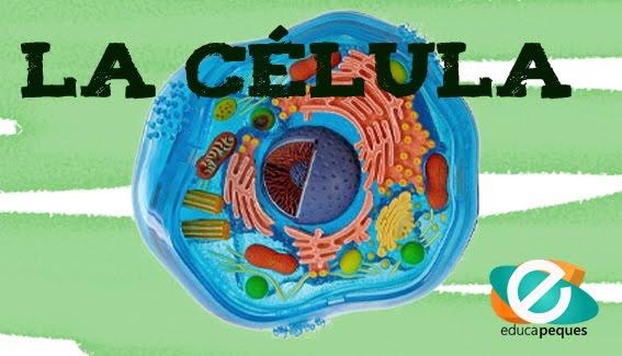 LA CÉLULA - 2