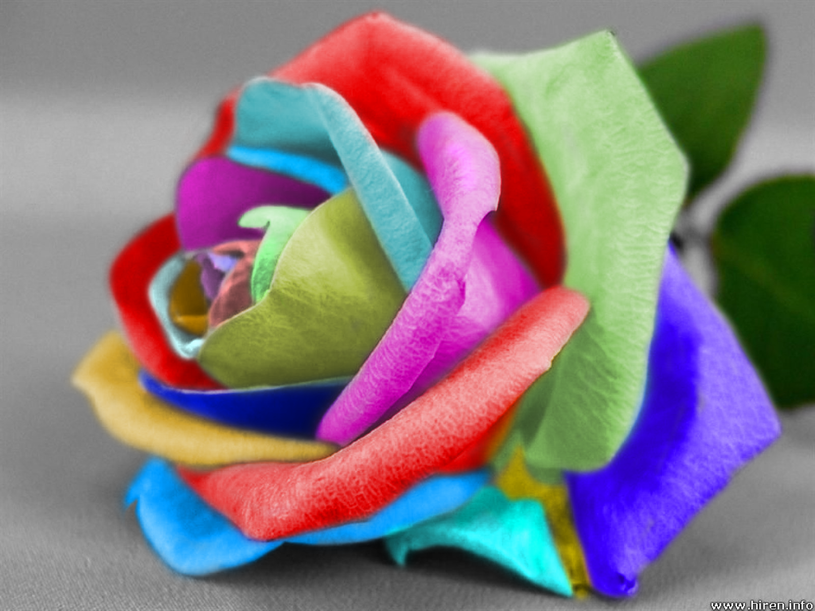 Sophie jenner i spring tag for How to color roses rainbow