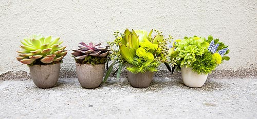 flores baratas jardim:Jardim-fácil-barato-suculentas-decoração-jardim-jardim-sustentécel