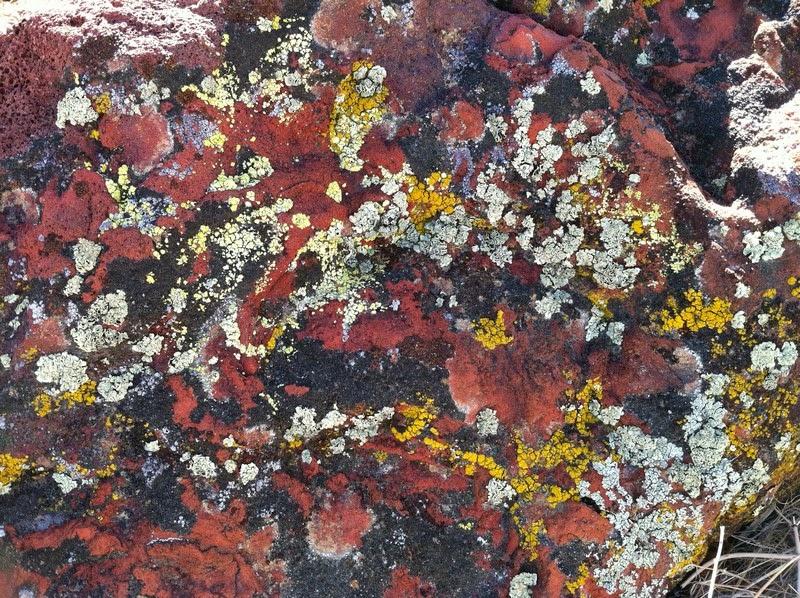 inyo county geology - lichen