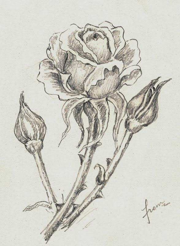 Lightly Drawn Sketch of a Rose