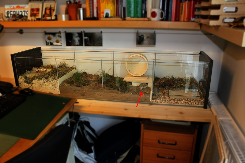 Critters on pinterest hamster cages hamsters and rats for Meuble aquarium ikea