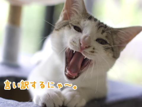 怒っている子猫