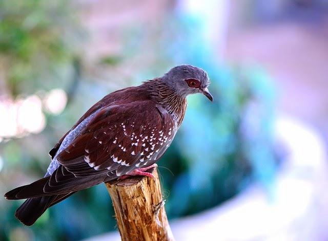 Repelentes para pombos (como acabar com pombos no telhado)