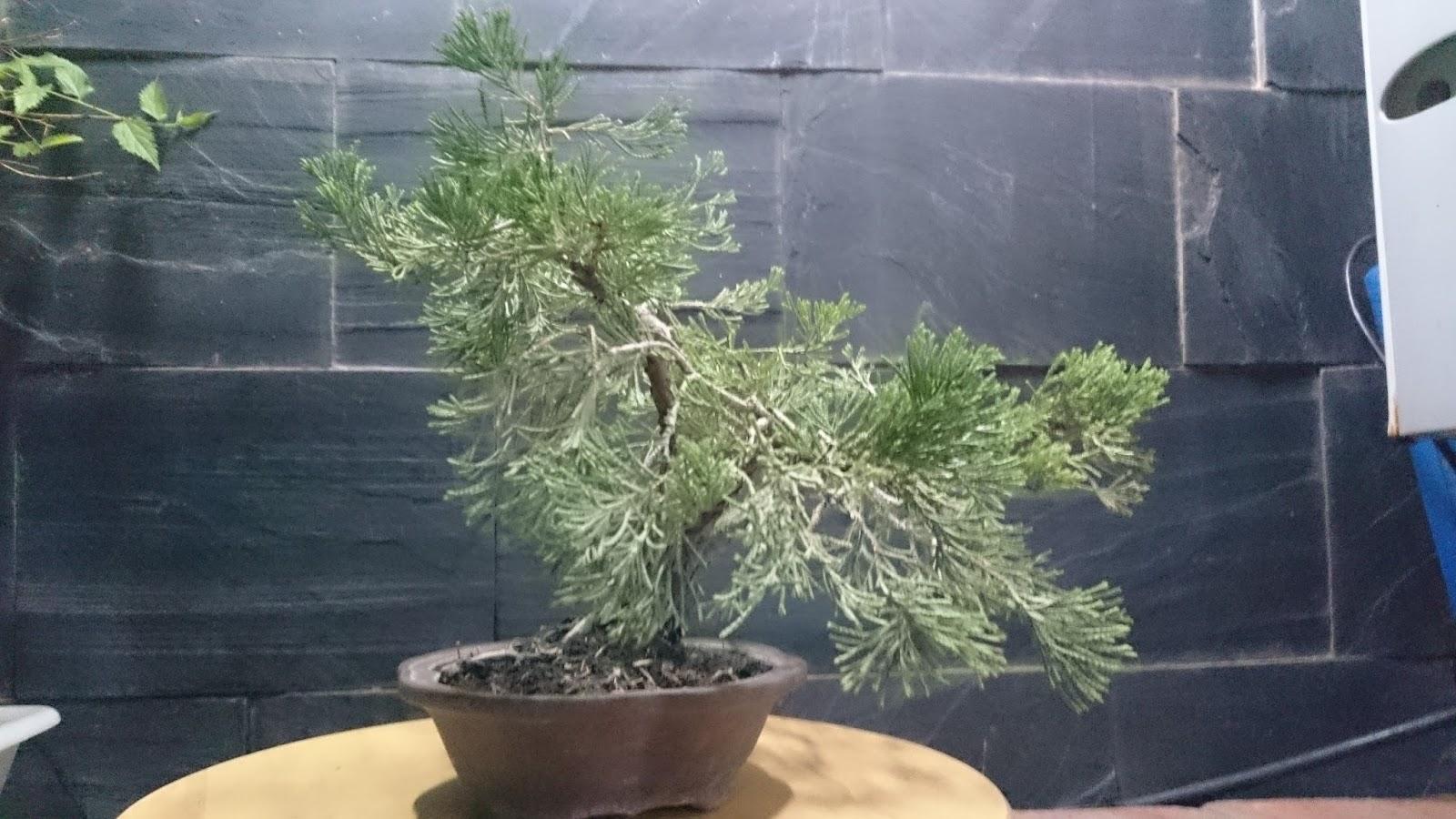 Expr sion bons i macetas nuevas y alg n proyecto mas for Pececillo nuevo de cualquier especie
