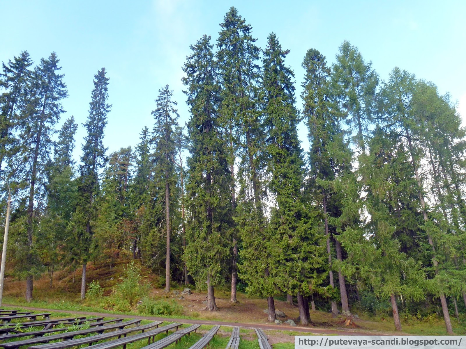 знакомству в с лесом