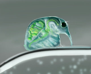 Water Flea Photoshop Study