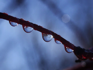 Happy beautiful rainy season, pictures, images, wallpapers