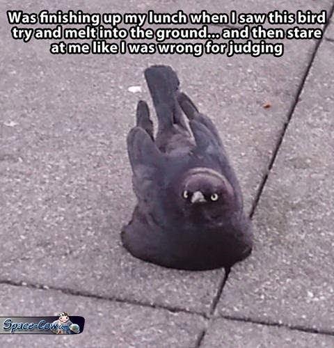 funny bird humor pics
