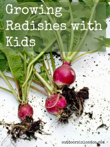 Growing Radishes with Kids @ Outdoors In London