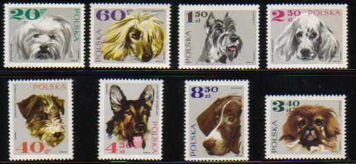 1969年ポーランド共和国 マルチーズ アフガン・ハウンド シュナウザー イングリッシュ・セター フォックス・テリア ジャーマン・シェパード ポインター ペキニーズの切手