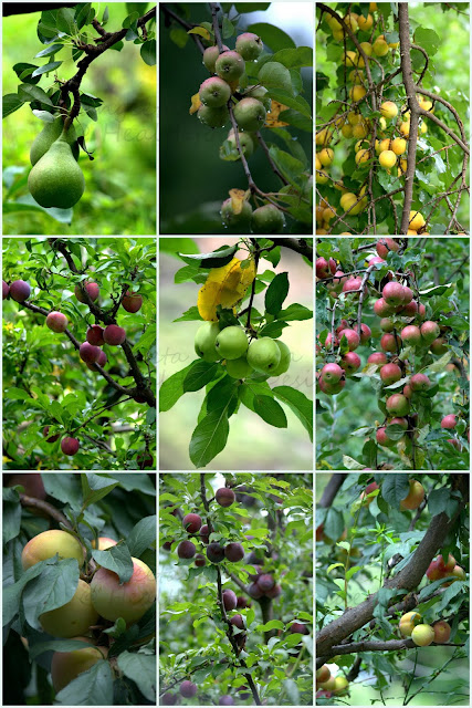 fruits on trees