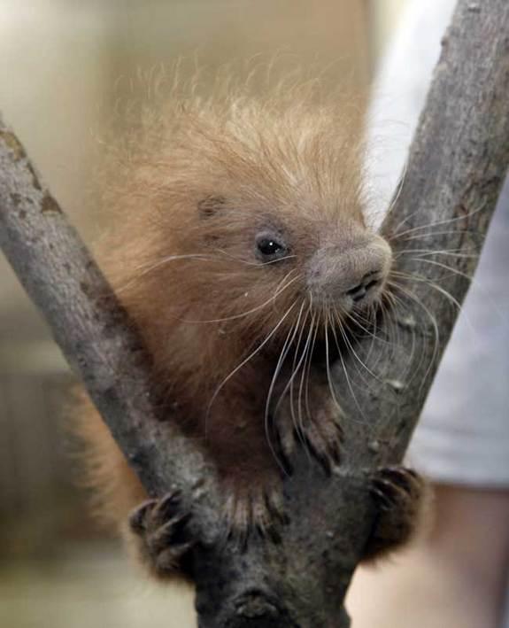 Cute wild baby animals - photo#11