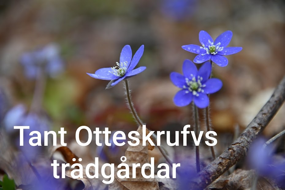 Tant Otteskrufvs trädgårdar