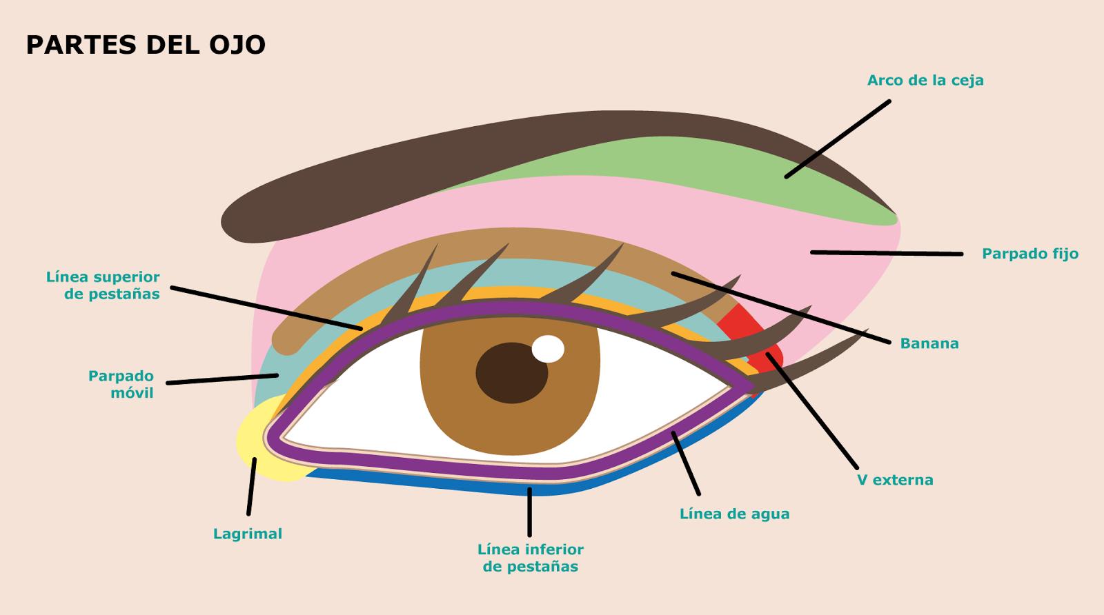 Las máscaras que restablecen para los ojos las revocaciones