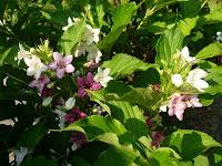 花々は季節をもっている