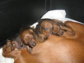 i miei dolci cuccioli a 20 gg dalla nascita!!!